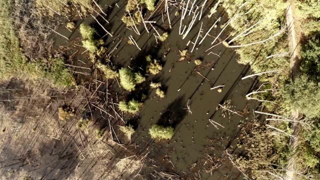 Broken trees aerial shot video