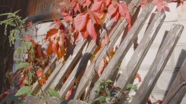 stockvideo's en b-roll-footage met gebroken houten hek - fence