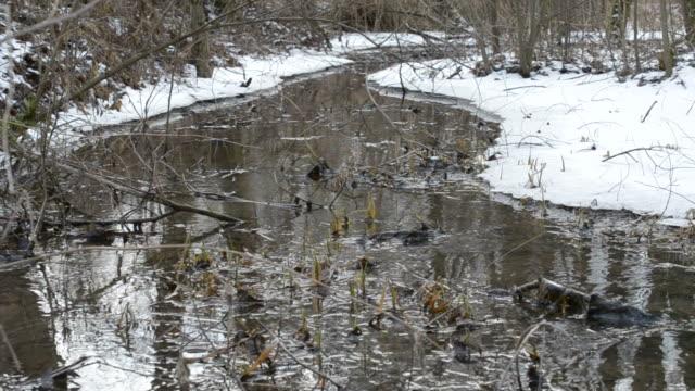 Brook flowing through a snowy landscape video