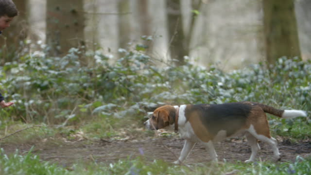 Brother and sister playing with their pet dog in a forest video