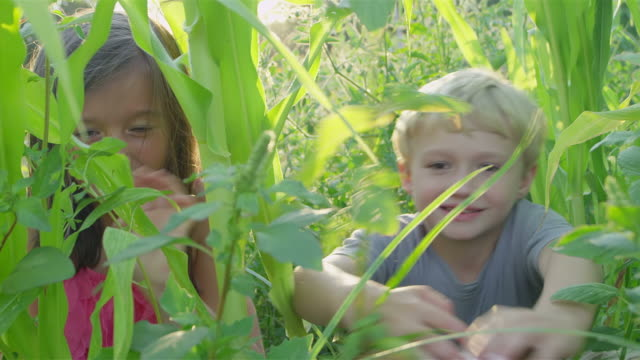 Brother and sister smile for the camera -Uberstock- HD 1080p-  A cute pair of siblings sit in a tall corn field and then they spread about the plants and smile for the camera.  Medium shot.  side lit stock videos & royalty-free footage