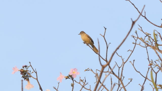 Brown bird on a tree. video