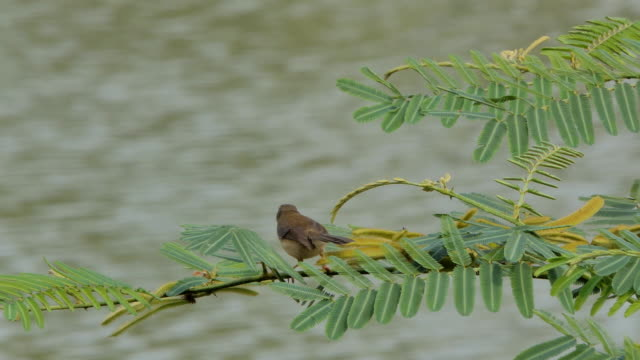 Brown bird on branch in wetland. video