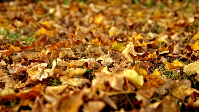 Brown dry leaves on the floor, close dolly shot