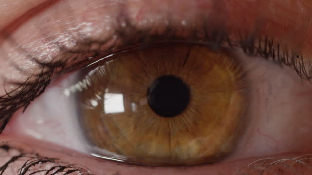 MACRO DOF: Brown eye looking into camera, which refocuses from iris to eyelashes video