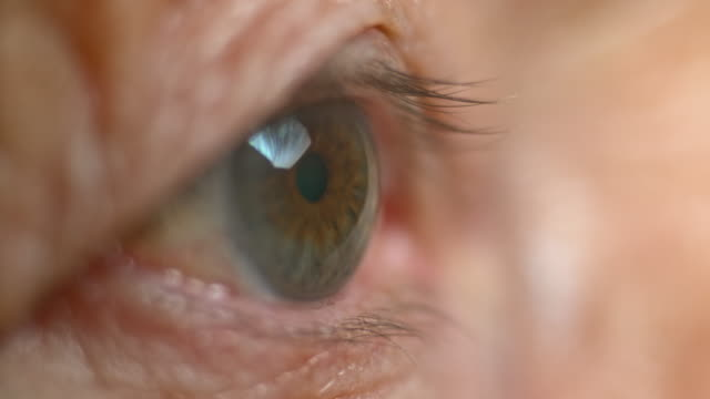 stockvideo's en b-roll-footage met ecu brown oog van een ouderdomsdeken sluiten - ooglid