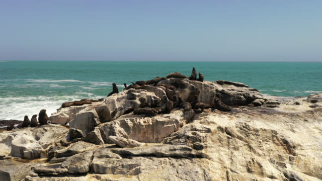 WS Brown fur seals sunbathing on sunny rocks, Namibia, Africa Brown fur seals sunbathing on sunny rocks, Namibia, Africa. Zoom In, Real Time. swakopmund stock videos & royalty-free footage