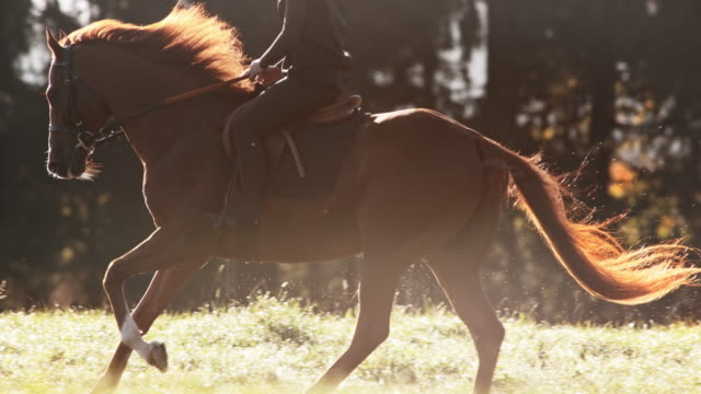 slo mo ts brun häst som ridas i galopp - häst bildbanksvideor och videomaterial från bakom kulisserna