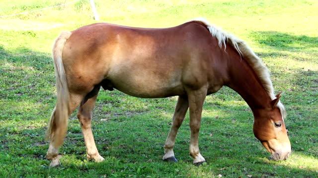 stockvideo's en b-roll-footage met bruin paard eten gras van kant - s
