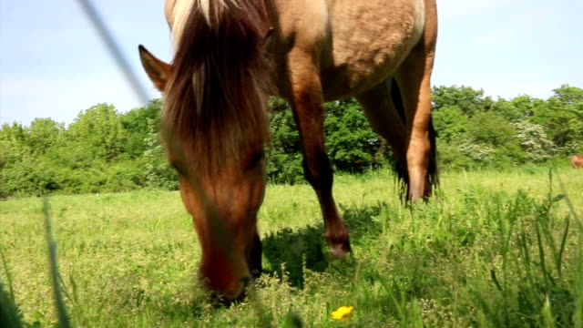 brown horse eating grass on meadow, low angle - sella video stock e b–roll