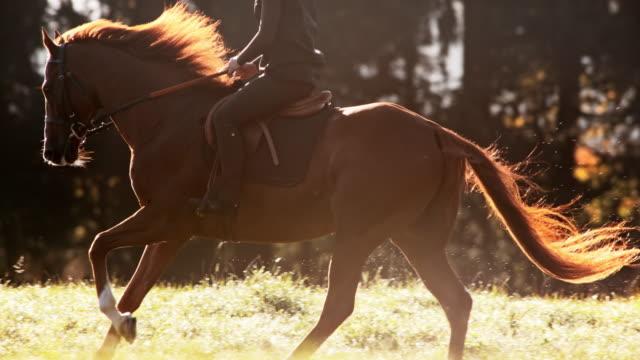 vídeos de stock, filmes e b-roll de slo mo ts cavalo marrom que galopa com o cavaleiro através do prado - cavalgar