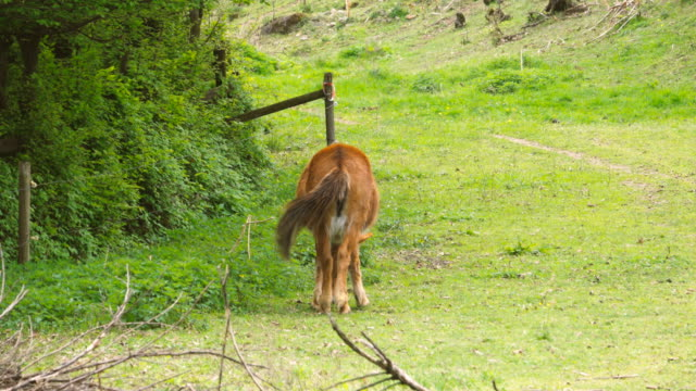 brown horse grazing grass on a green meadow in the countryside - cavallo purosangue video stock e b–roll