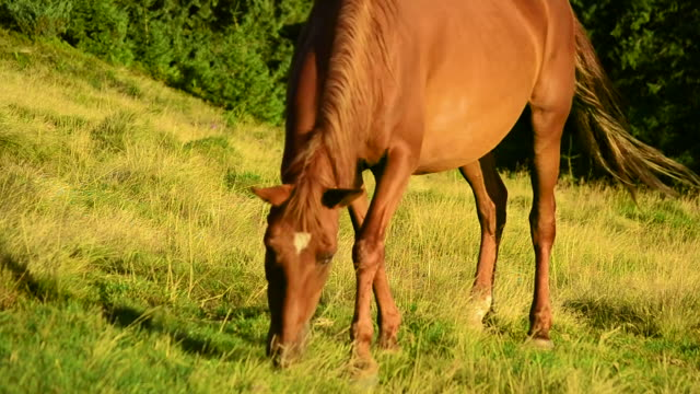 brown horse grazing on pasture video