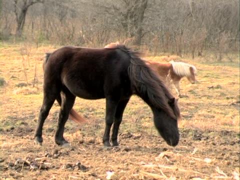 brown horse トレーダー - 動物の行動点の映像素材/bロール