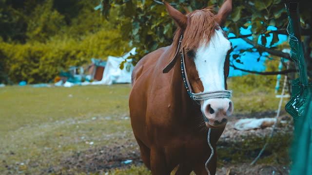 Brown horse in a farm.
