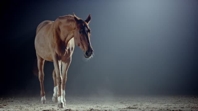 slo mo brun häst i ett ridhus på natten - racehorse track bildbanksvideor och videomaterial från bakom kulisserna