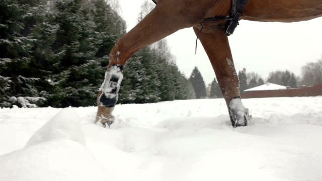 Brown horse trotting through white snowy blanket. Powerful brown gelding stepping on field covered with dry powder snow, snowflakes rising and flying around. Close up. video