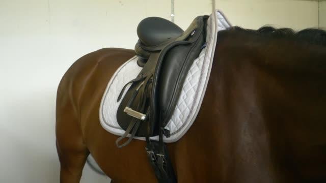 vídeos de stock, filmes e b-roll de close-up: cavalo castanho tremem enquanto espera no estábulo antes de adestramento. - cauda