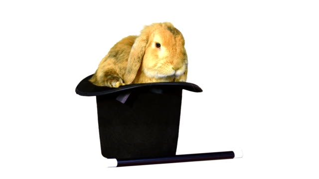 Brown rabbit inside a top hat, and a magic wand on white background video