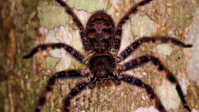 木の幹に茶色のクモ - こっそり点の映像素材/bロール