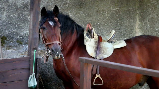 Brown tied up horse with a saddle is looking around Brown tied up horse with a saddle standing and looking around saddle stock videos & royalty-free footage