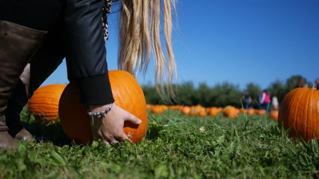 brunette woman picks up a pumpkin in a field during autumn at pumpkin patch - pumpkin стоковые видео и кадры b-roll