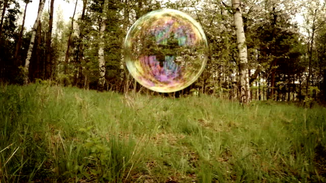 Bubbles in the forest. video