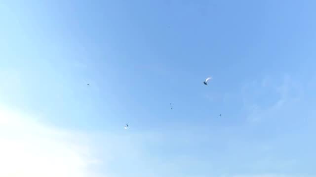 Bucharest , Skydiver Parachuting Extreme Sport