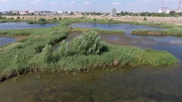 Bucharest Wild Wetland Aerial video