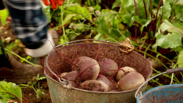 Bucket Of Beet video