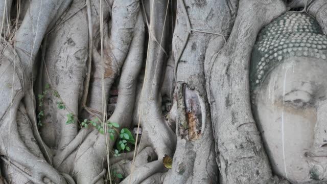 Buddha head in tree roots at ayutthaya ,Thailand video