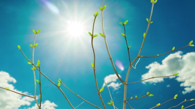 vídeos y material grabado en eventos de stock de hojas de florecimiento en la primavera, time-lapse con nubes - prosperidad