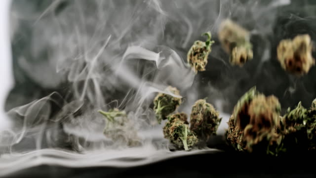 SUPER SLO MO Buds of marijuana falling over smoky background Super slow motion shot of smoke billowing over black background while buds of marijuana falling on a table . Studio shot. marijuana herbal cannabis stock videos & royalty-free footage