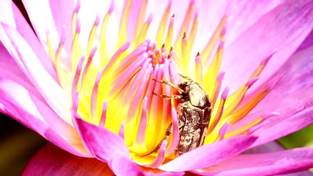 bug climbing in lotus flower video