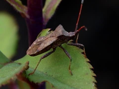 bug pal - parte della pianta video stock e b–roll