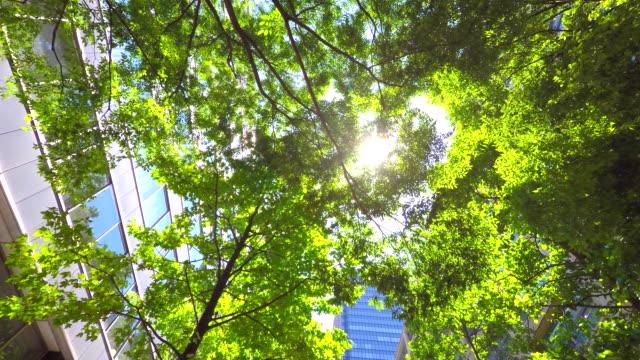 ビル、緑色-4 k - 緑 ビル点の映像素材/bロール