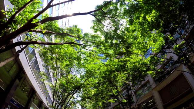 建物内にグリーンのスタイルでスカイ - 緑 ビル点の映像素材/bロール