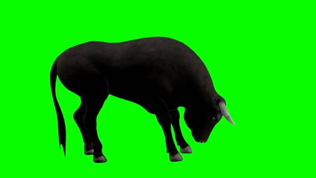 Bull Eating Green Screen (Loopable) video