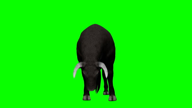 bull essen green screen (loopable) - stier stock-videos und b-roll-filmmaterial