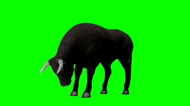 bull essen greenscreen (endlos wiederholbar) - stier stock-videos und b-roll-filmmaterial
