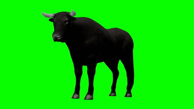 Bull Idle Green Screen (Loopable) video