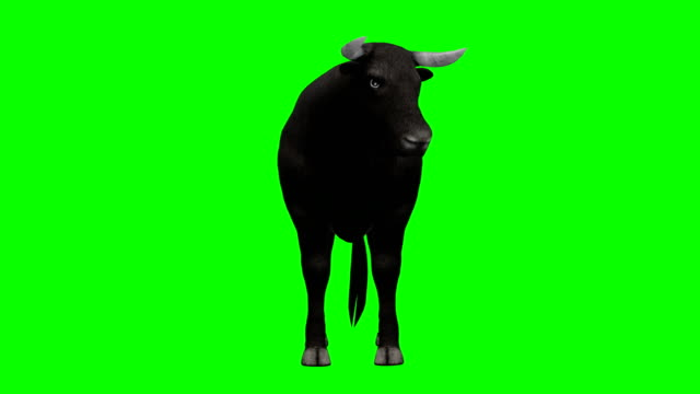 bull im leerlauf green-screen (endlos wiederholbar) - stier stock-videos und b-roll-filmmaterial