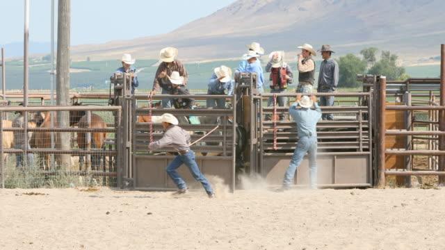 Bull Riding Cowboys at a Rodeo