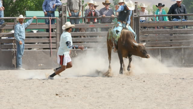 bull riding cowboys at a rodeo - rodeo stock videos and b-roll footage