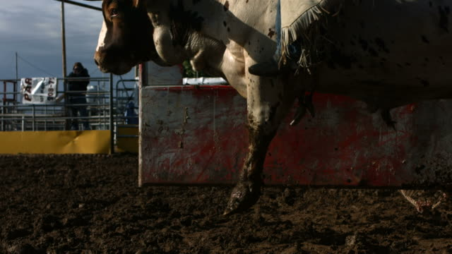 bull riding, slow motion - rodeo stock videos and b-roll footage