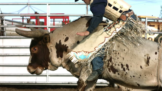Bull riding, slow motion