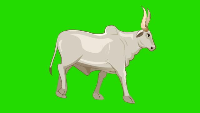 Bull Walk cycle animation