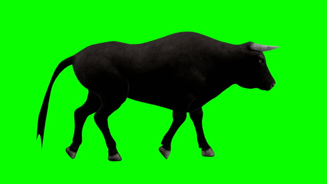 bull walking green screen (loopable) - stier stock-videos und b-roll-filmmaterial