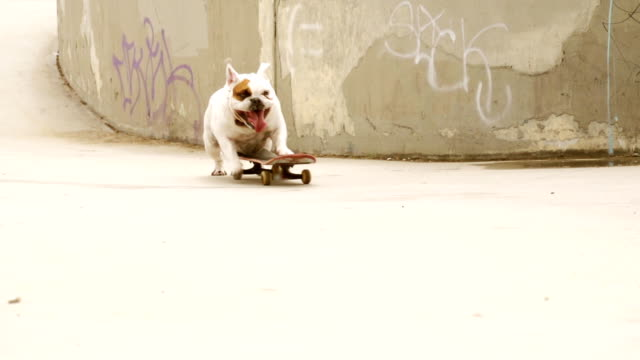 MONTAGE Bulldogge Skating – Video
