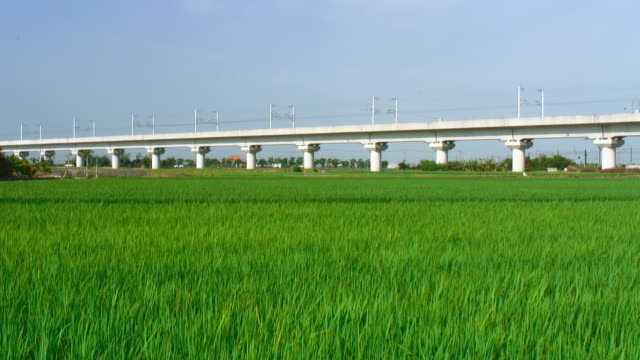 Bullet train and rice field video